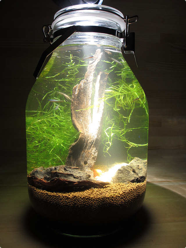 for Micro fish tank