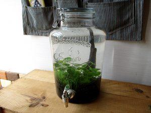 ボトルアクアリウム 蛇口付きのビン