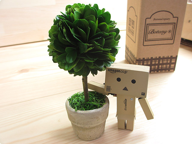 Box wood topiary(Ball)ウッドトピアリー