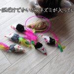 マルカン-パニックマウス
