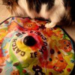 室内飼いの猫を鳴き止ませる方法