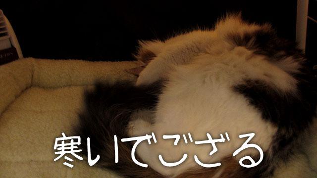 猫の寒さ対策
