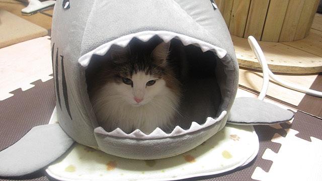 PHK-L+サメ型 ペットハウス