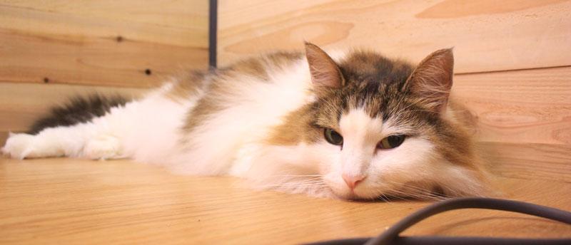 猫の目の涙が治る